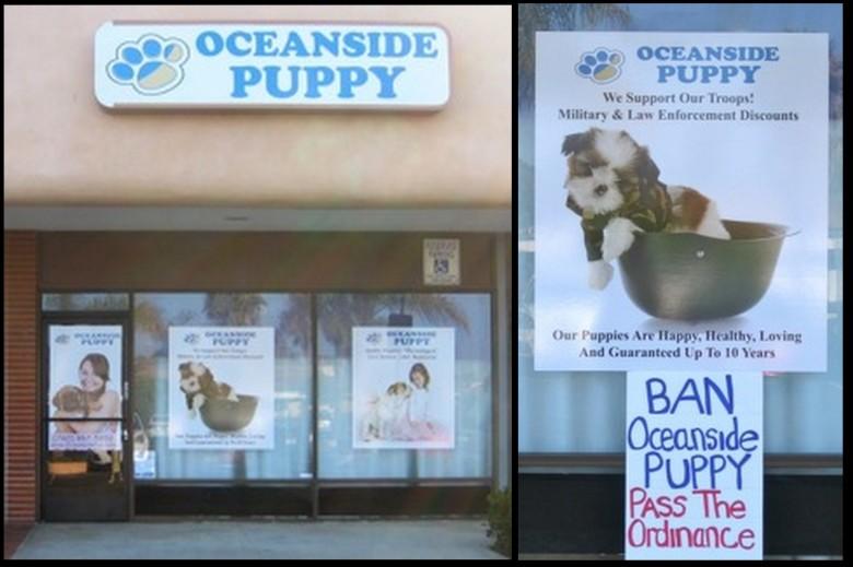 Ban Oceanside Puppy