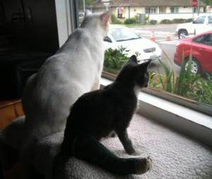 Gwynn and Casper