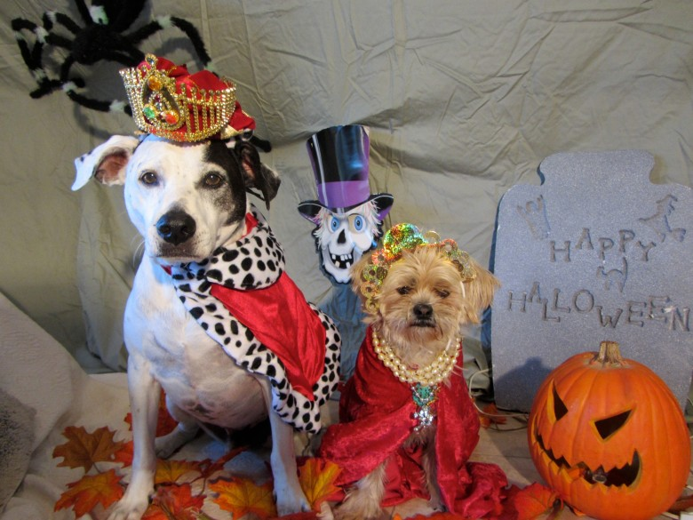 2nd SPOT Howl-o-ween Spooktacular October 27th Buddy Todd Park 1pm-4pm