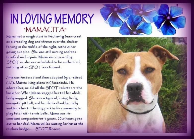 A Tribute To Mamacita…