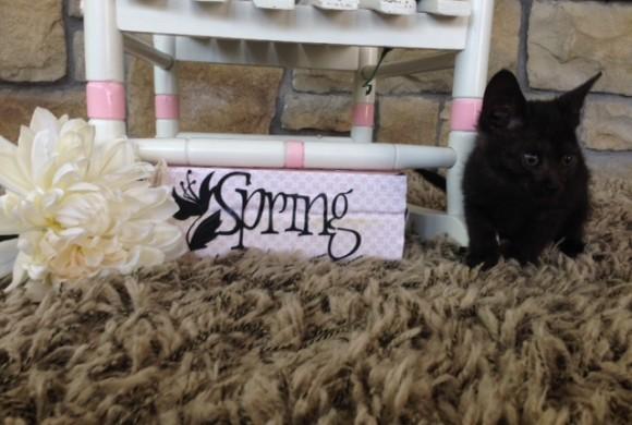 Camara's Spring Fling!!