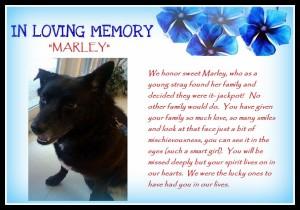 Marley ILM3