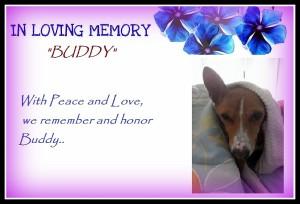 Buddy final