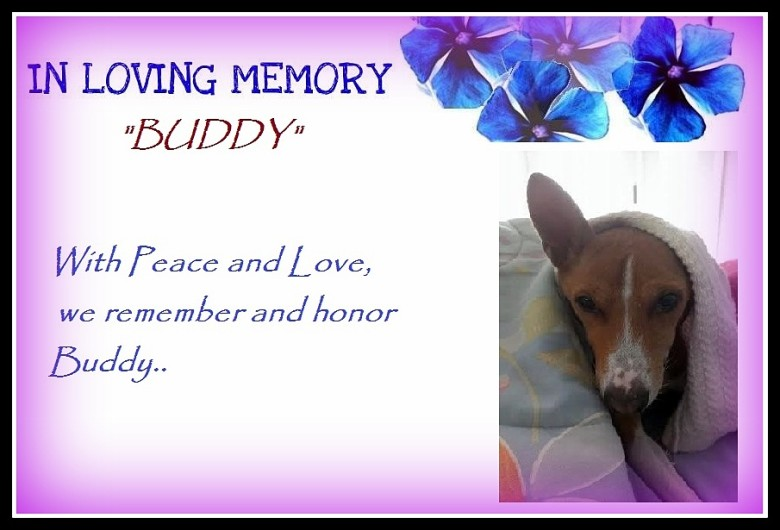 A Tribute To Buddy…