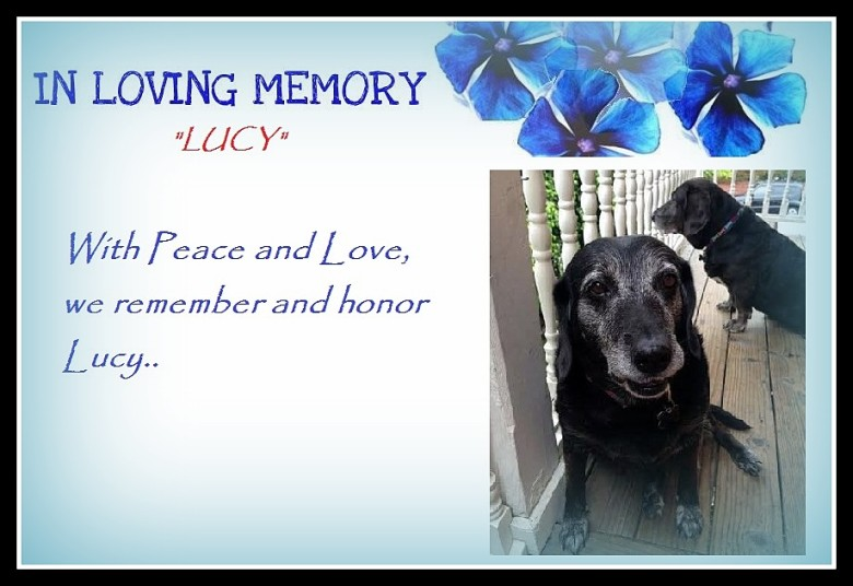 A Tribute To Lucy…