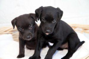 delta-dawn-pups-1