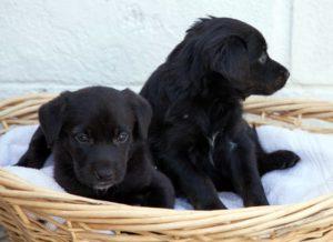 delta-dawn-pups2-1
