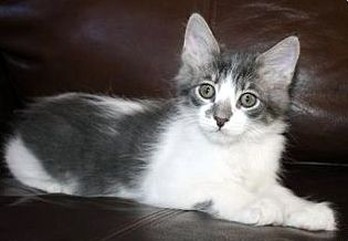Caterpie needs a new, loving family!