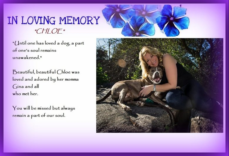A TRIBUTE TO CHLOE…