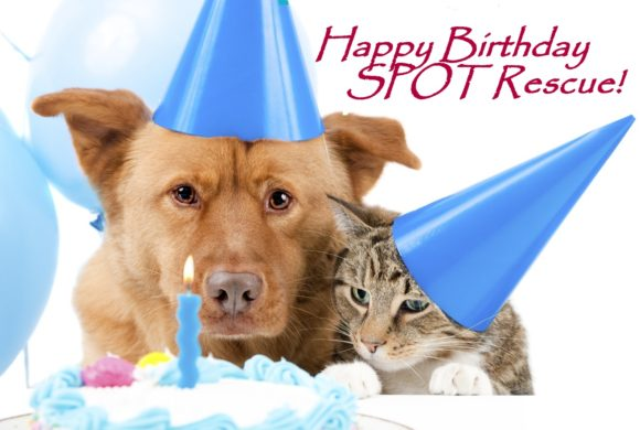 SPOT's 7th Birthday Bash on March 30th!!