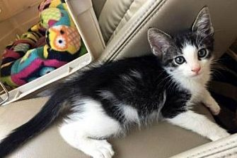 Lil DQ needs a loving family!