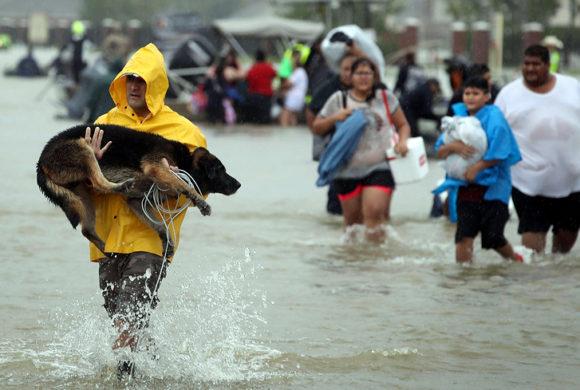HELP SPOT SAVE ANIMALS FROM HURRICANE HARVEY!!
