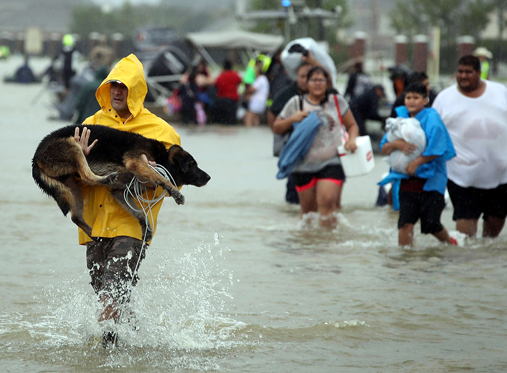 HELP SPOT SAVE ANIMALS FROM HURRICANE HARVEY!!