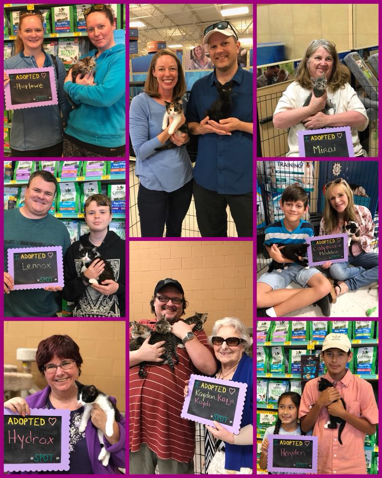 New kitty families!