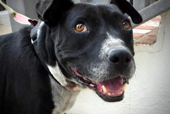 Roxie needs a loving family!