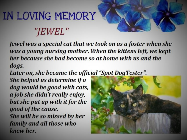 A Tribute to Jewel..