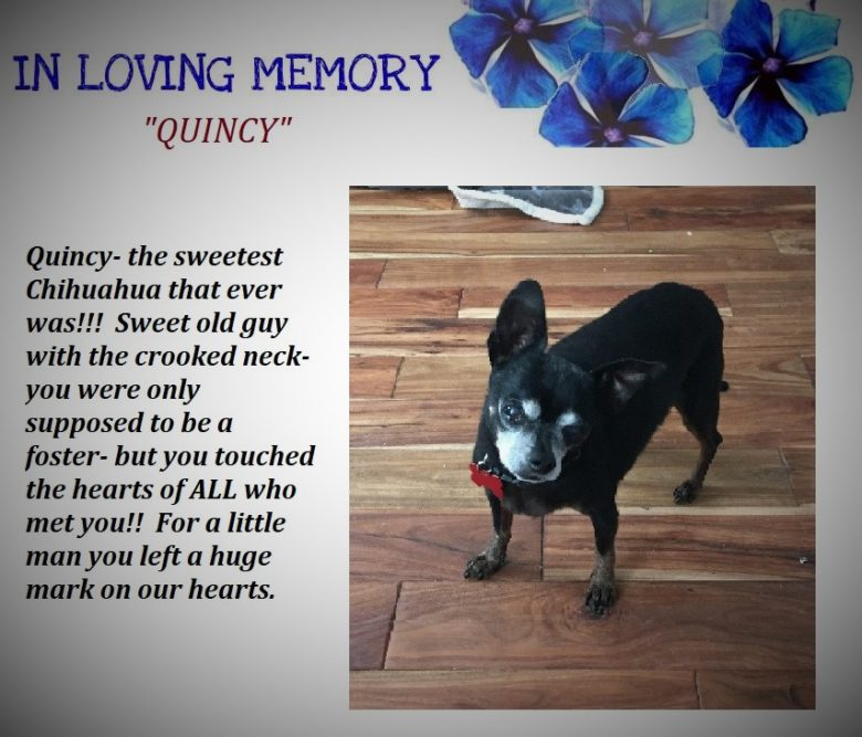 A Tribute to Quincy..