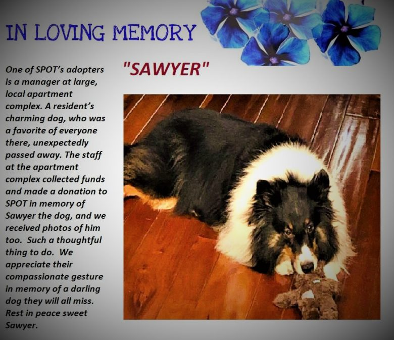 A Tribute to Sawyer…