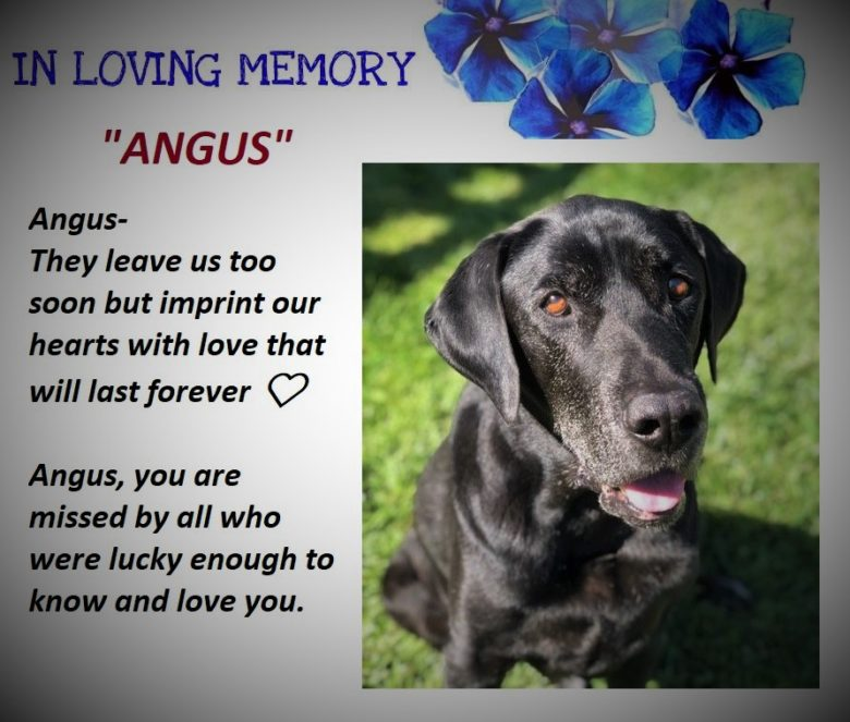 A Tribute to Angus…