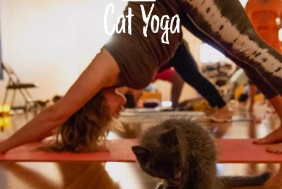 Catfabulous Yoga Event!!