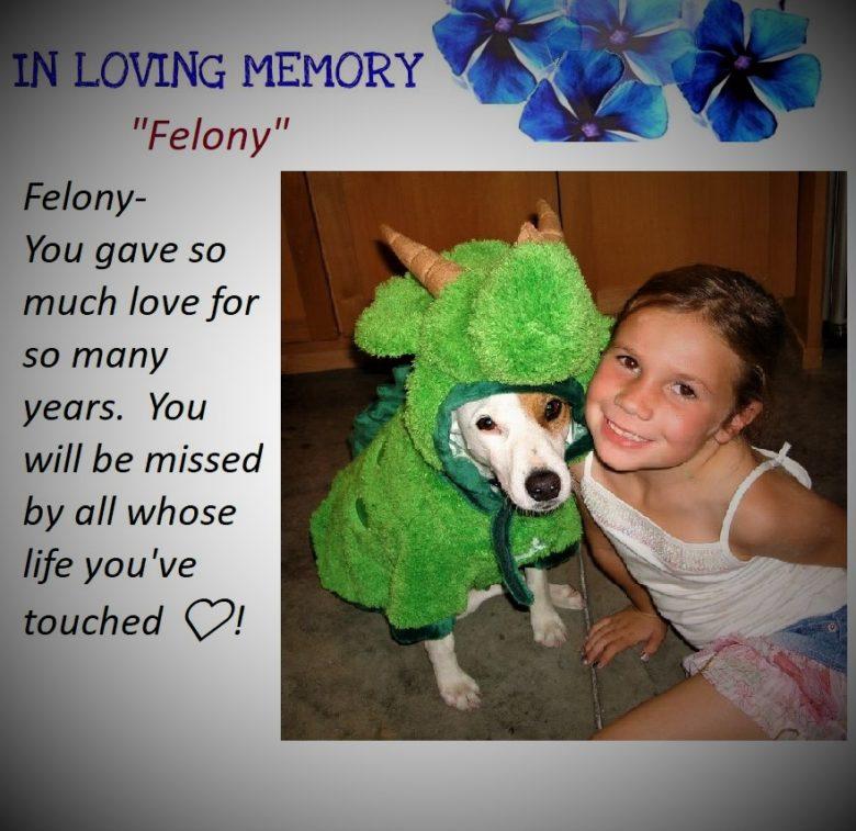 A Tribute to Felony…
